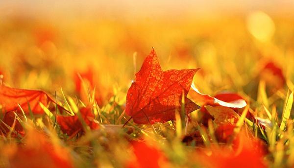 Užite si jesennú nádielku v ZION SPA.